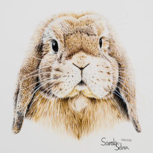 Zeichnung Hase