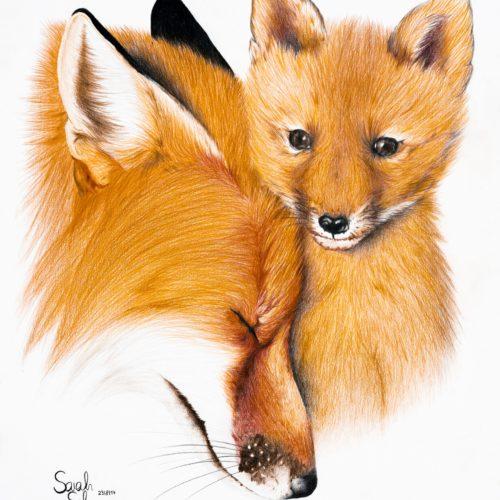 Fuchsmutter und Junges
