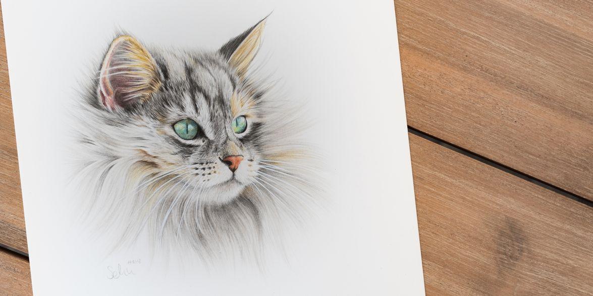 Norwegische Waldkatze Lilli