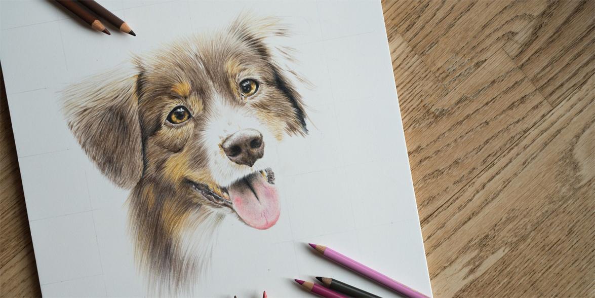 Zeichnung Tier Künstlerzeichnung